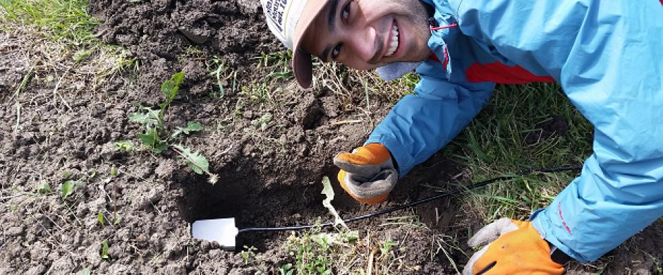Undergraduate Researcher Stephen Maldonadao finishes inserting soil moisture probe in place at OARDC-Northwest.