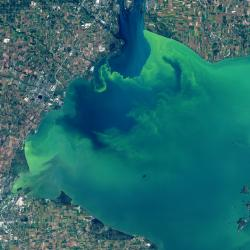 Lake Erie Algal Bloom Photo from September 26, 2017